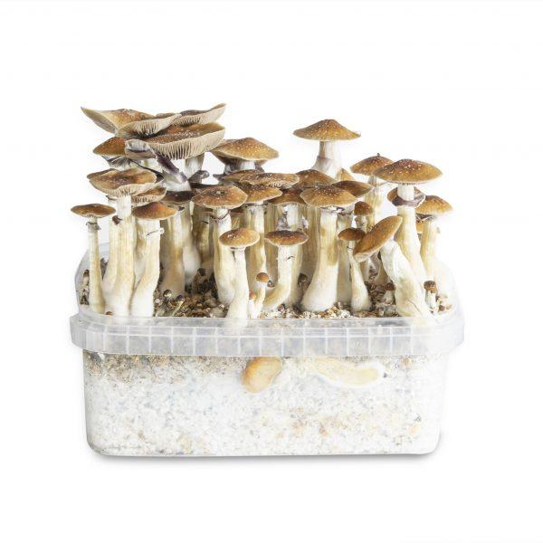 PF Classic magic mushroom grow kit