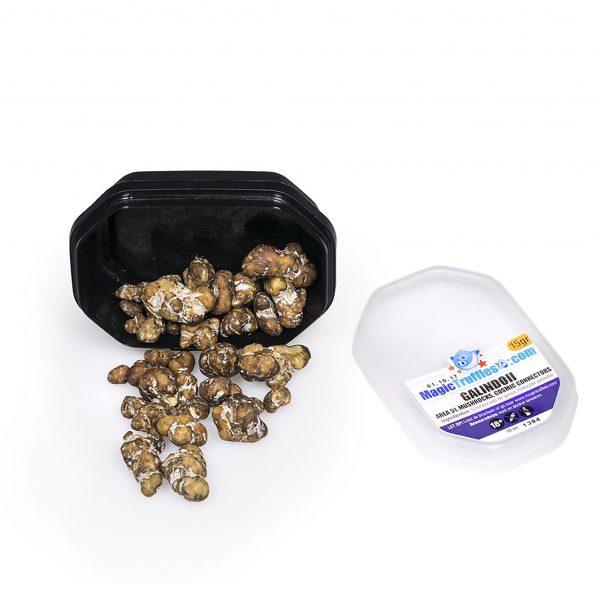 Magic truffles Galindoii